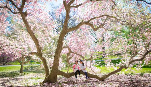 2019年4月〜5月関東/関西での個人セッションのご案内(5月の日程追加)